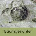 Anke Sommer - Baumgesichter im Bienwald